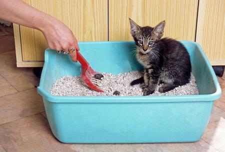 Tierbedarf in Raten abbezahlen